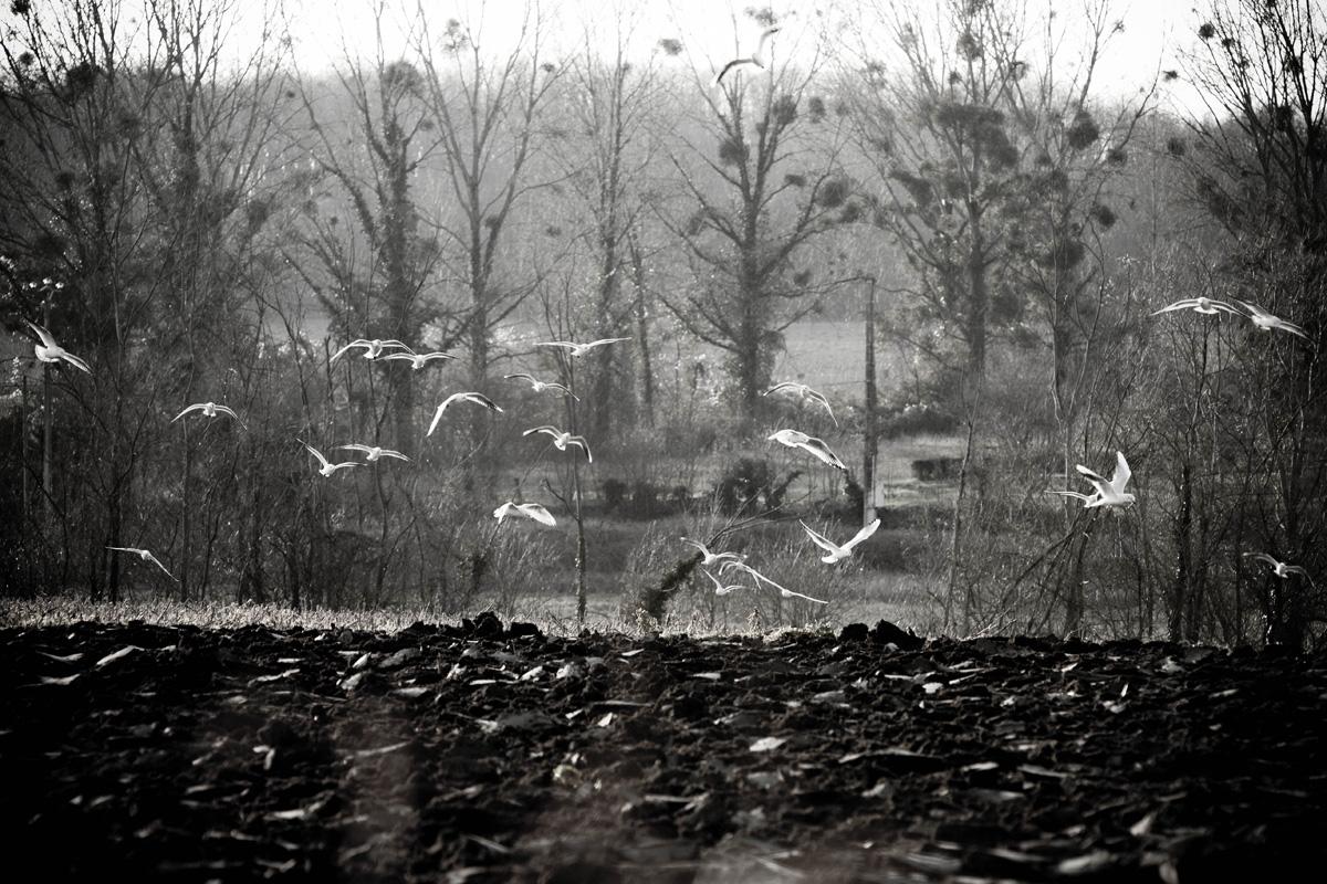 vol d oiseau