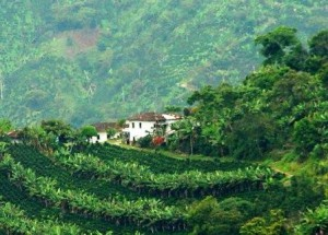 colombie-Terraces-Cafe-1